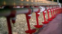 Poultry Equipments