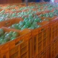 Export Tomato