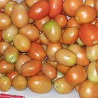 Fresh Export qlity Tomatos