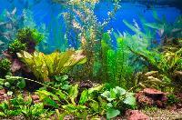 Aquarium Plants