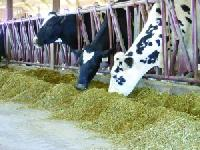 Lacto Care Dairy Cattle Feed Supplement