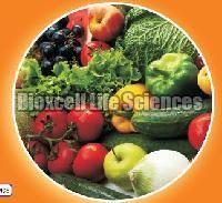 Bactophos Bio Fertilizer