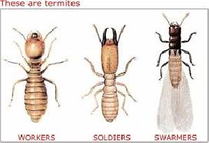 Anti Termite Control Treatment Services