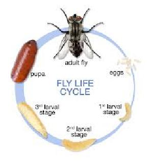 Flies Control Treatment Services