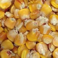 Sweet Corn Seed