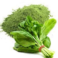 Spray Dried Spinach Powder
