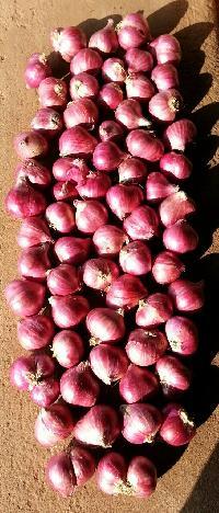 Podisu Shallot Onion