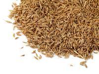 Cumine Seed
