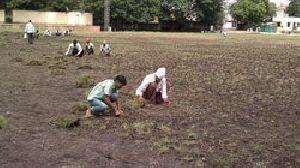 Lawn Plantation Services