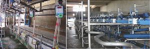 Swingover Milking Parlor
