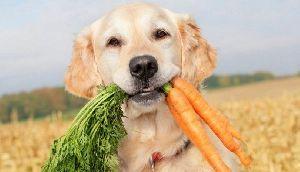 Pet Nutritious
