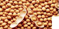 Soya Seed