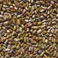 Puwar Seed(cassiatora Seed).