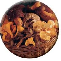 Cascade Mushroom