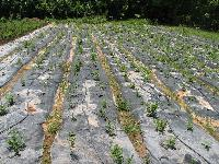 Agriculture Mulching Sheet