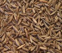 Bishops Seed