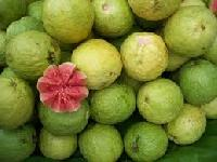 Guava Fruits