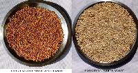 Sorghum - White & Red - Jowar - Cholam