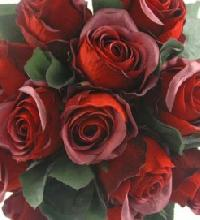 Fresh Dark Red Roses