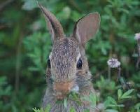 Rabbits Feed