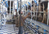 Automated Milking Parlors