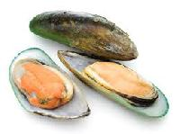 New Zeland Green Shell Mussels