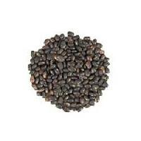 Cinnamon Camphora Seeds