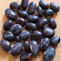 Kaunch Seed
