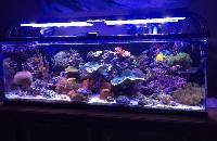 Aquarium Lights