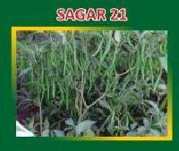 Sagar-21 Hybrid Green Chilli Seeds