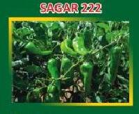Sagar-222 Hybrid Green Chilli Seeds