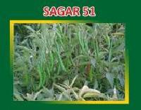 Sagar-51 Hybrid Green Chilli Seeds
