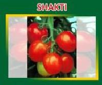 Shakti Hybrid Tomato Seeds