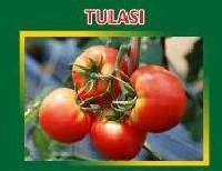 Tulasi Hybrid Tomato Seeds