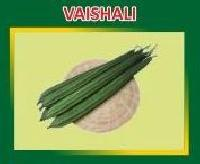 Vaishali Hybrid Ridge Gourd Seeds