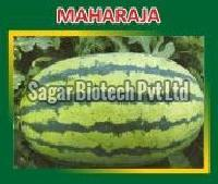 Maharaja Hybrid Watermelon Seeds