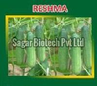 Reshma Hybrid Cucumber Seeds