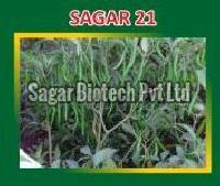 Sagar-21 Hybrid Green Chilli Seeds
