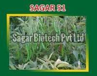 Sagar-51 Hybrid Green Chilli Seeds