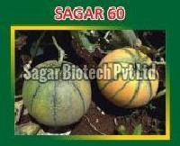 Sagar-60 Hybrid Muskmelon Seeds