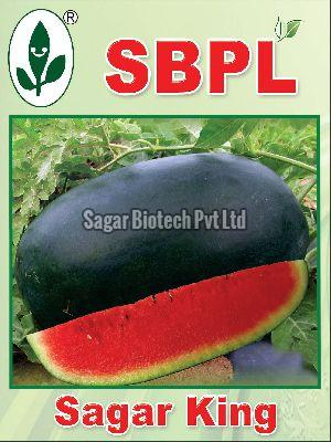 Sagar King Hybrid Watermelon Seeds