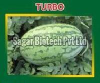 Turbo Hybrid Watermelon Seeds