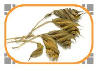 Helicteres Isora Herb