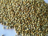Green Millet/bajra