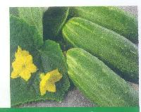Pahadi Long Cucumber Seeds