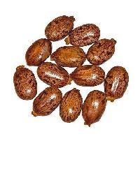 Castor Oil Seeds