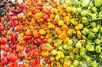 Chilli Hot Pepper Seeds