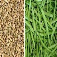 Vnr Cluster Bean Seed