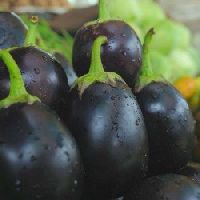 Brinjal Black Beauty Seeds