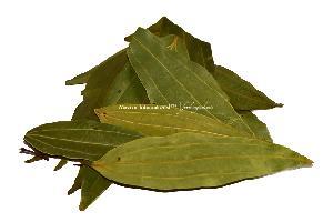 Dehydrated Bay Leaf